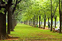 Bangalore: Cubbon Park